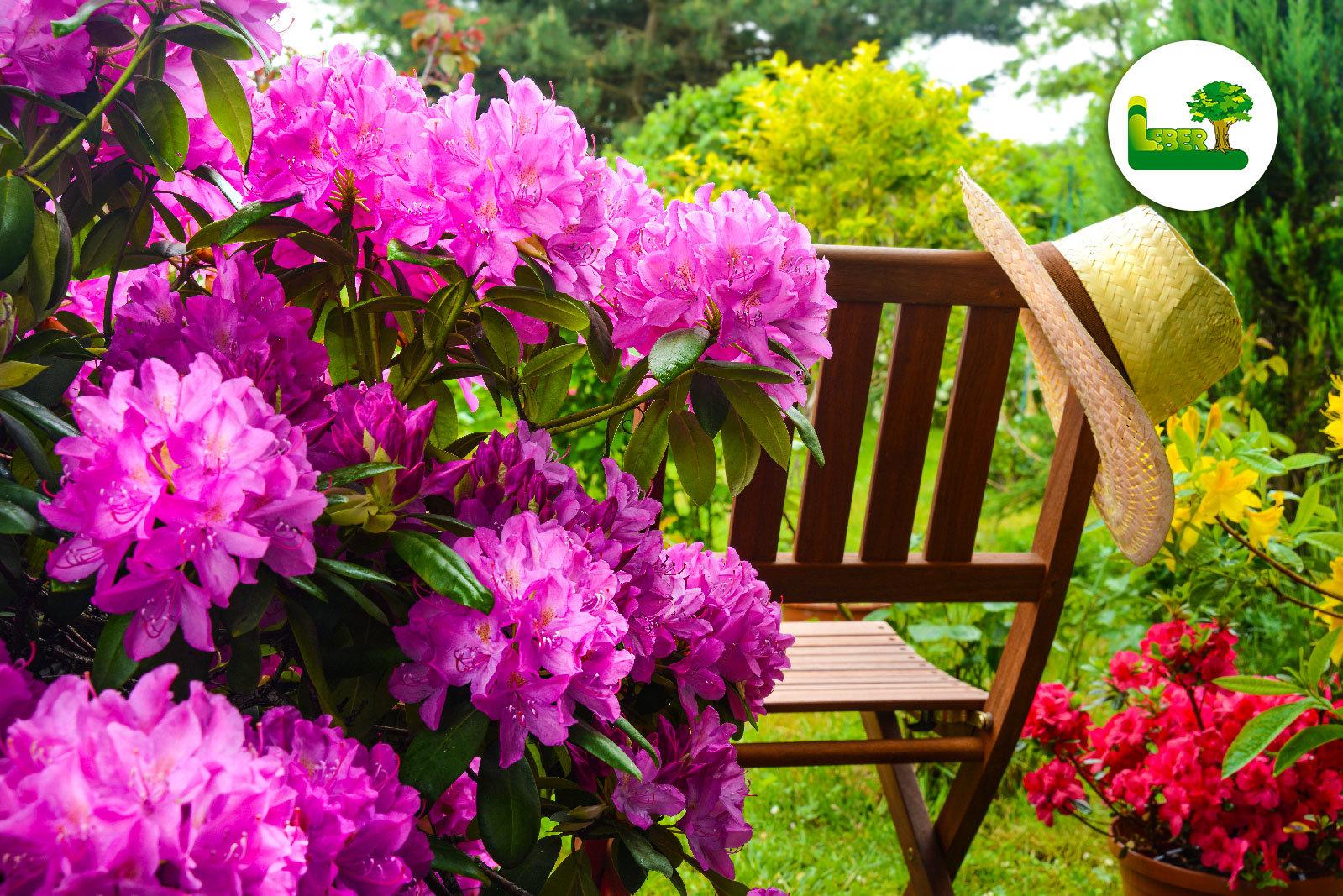 rhododendron tipps tricks zum traumhaften garten. Black Bedroom Furniture Sets. Home Design Ideas